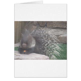 porcupine hälsningskort