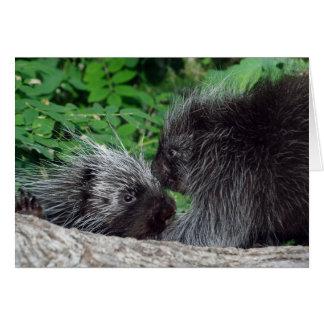 Porcupine - mamma och baby hälsningskort