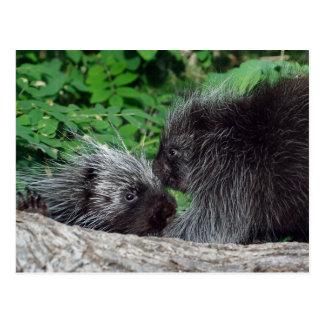 Porcupine - mamma och baby vykort