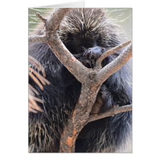 Porcupine OBS Kort