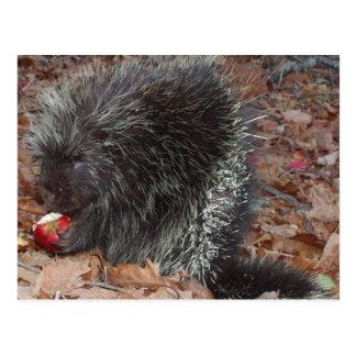 Porcupine och Apple Vykort