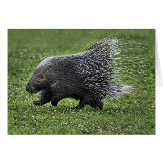 Porcupinegaloppkort Hälsningskort
