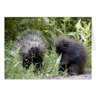 porcupines hälsningskort