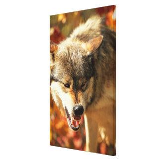 Porträtt av att brumma för varg canvastryck