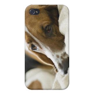 Porträtt av bassetten, Washington 2 iPhone 4 Skydd