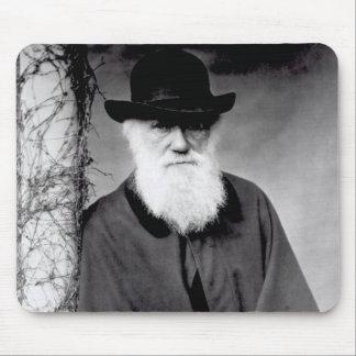 Porträtt av Charles Darwin 1881 Musmatta