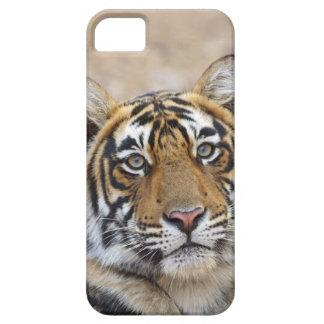 Porträtt av den kungliga Bengal tigern, iPhone 5 Cover