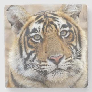 Porträtt av den kungliga Bengal tigern, Underlägg Sten