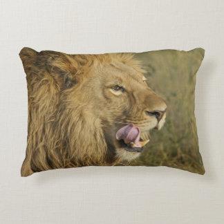 Porträtt av den lejona manlign som slickar hans prydnadskudde