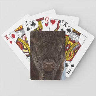 Porträtt av en Bisontjur i regna Kortlek
