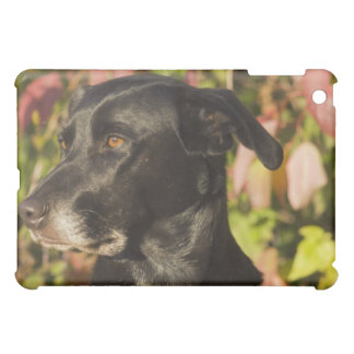 Porträtt av en hund iPad mini mobil skal
