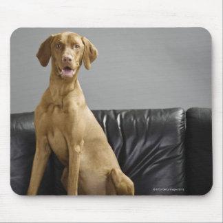 Porträtt av en hund musmatta