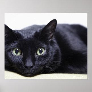 Porträtt av en katt poster