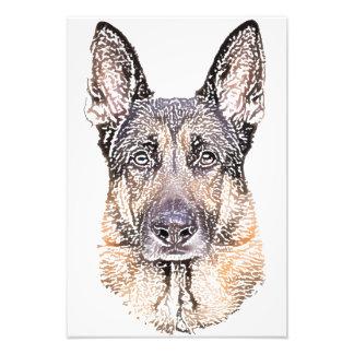 Porträtt av en tysk herdefärgad för hund skissar fototryck