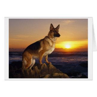 Porträtt av en tysk herdehund eller schäfer hälsningskort