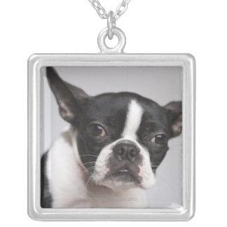 Porträtt av hunden silverpläterat halsband