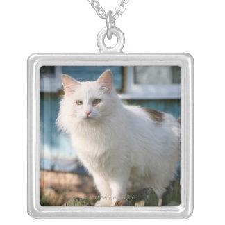 Porträtt av katten på staket silverpläterat halsband