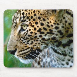 Porträtt av leoparden (pantheraen Pardus) Musmatta