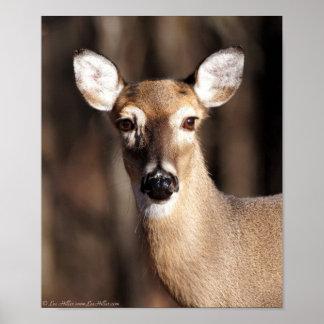 Porträtt för Doe för djurlivWhitetailhjort Poster