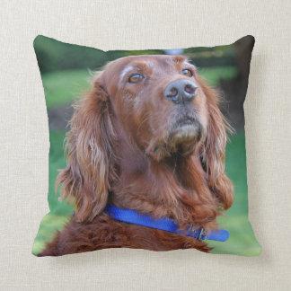 Porträtt för fotoet för den irländska Setterhunden Kudde