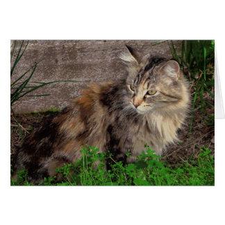 Porträtt för katten för den Maine coonen noterar OBS Kort