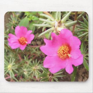Portulaca blommor musmatta