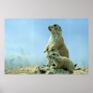 Präriehundmor och baby poster