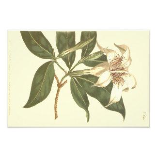 Prickig blommig Gardeniaillustration Fototryck