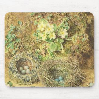 Primroses och fåglar bygga bo mus mattor