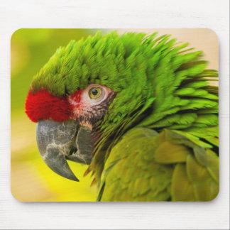 Profilera av macaw på den Santa Barbara zooen Musmatta
