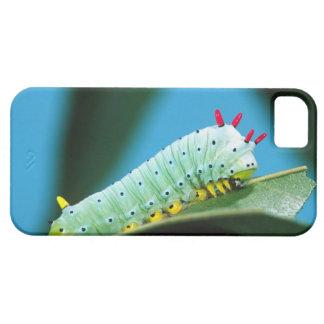 Prometheus-mal Caterpillar, Callosamia iPhone 5 Cover