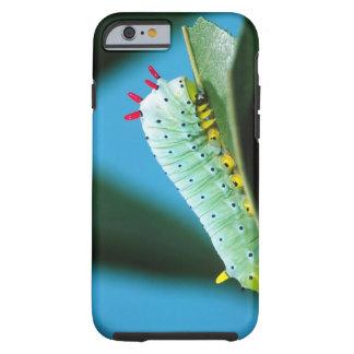 Prometheus-mal Caterpillar, Callosamia Tough iPhone 6 Skal