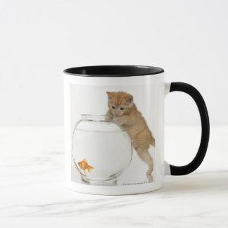 Pröva kattunge att få på en guldfisk