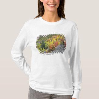 Provo flod- och aspenträd 10 tee shirts