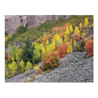 Provo flod- och aspenträd 10 vykort