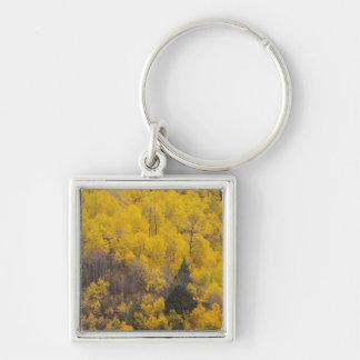 Provo flod- och aspenträd 12 fyrkantig silverfärgad nyckelring