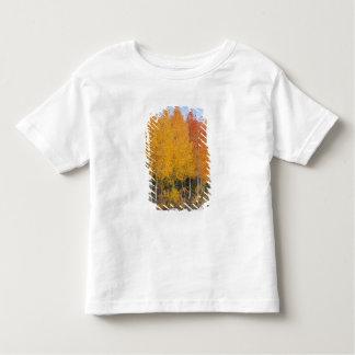 Provo flod- och aspenträd 13 t shirt