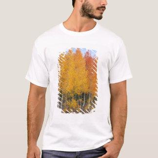 Provo flod- och aspenträd 13 tröja