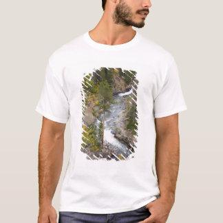 Provo flod- och aspenträd 14 tee shirts