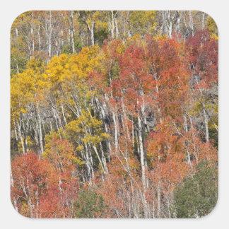 Provo flod- och aspenträd 15 fyrkantigt klistermärke
