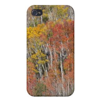 Provo flod- och aspenträd 15 iPhone 4 fodral