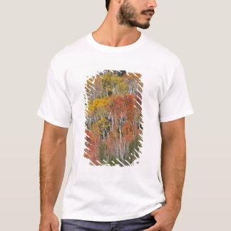 Provo flod- och aspenträd 15 t-shirt
