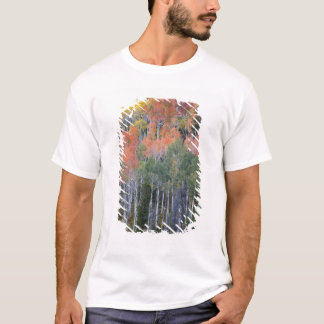 Provo flod- och aspenträd 16 tee shirts
