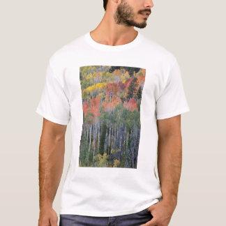 Provo flod- och aspenträd 16 tröja