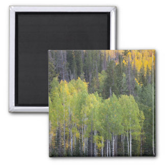 Provo flod- och aspenträd 2 magnet