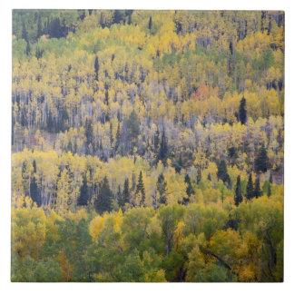 Provo flod- och aspenträd 3 kakelplatta