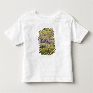 Provo flod- och aspenträd 3 t shirt