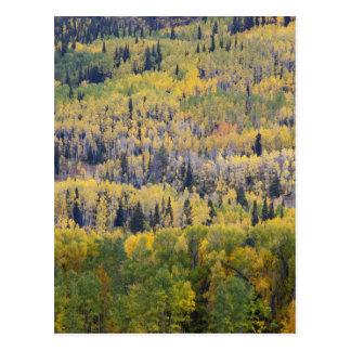Provo flod- och aspenträd 3 vykort