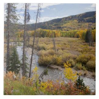 Provo flod- och aspenträd 5 kakelplatta