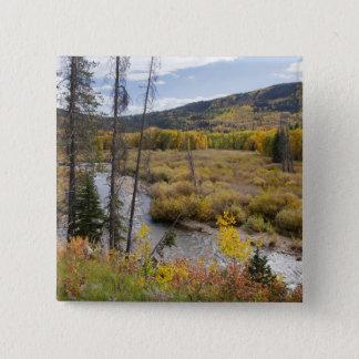 Provo flod- och aspenträd 5 standard kanpp fyrkantig 5.1 cm